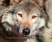 Carl, ANIMALS, wildlife, landscapes, photos(SWLA3923,#A#)