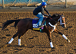 October 27, 2014:  Unbridled Forever, trained by Dallas Stewart, exercises in preparation for the Breeders' Cup Distaff at Santa Anita Race Course in Arcadia, California on October 27, 2014. John Voorhees/ESW/CSM