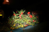 CHINA. Beijing. Flowers in the back of a truck. 2008