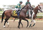 Rothko, ridden by Julien Leparoux, runs in the Vosburgh Invitational Stakes (GI) at Belmont Park in Elmont, New York on September 29, 2012.  (Bob Mayberger/Eclipse Sportswire)