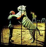 Khris Allen: Tigerman