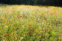 Meadow, Lenox, Berkshire Hills, MA