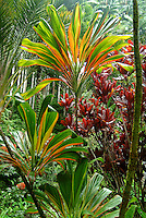 Tropical plants flourish in the Hawaii Tropical Botanical Garden on the Hilo side of the Big Island.