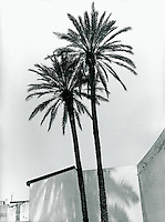Palme in Famagusta, Nordzypern 1992
