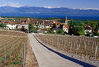 vineyard, Switzerland, La Cote, Vaud, Fechy, Lake Geneva, Alps, Europe, Vineyard road leads down to the village of Fechy covered with vineyards in the spring along Lac Leman in the Canton of Vaud. Scenic view of the Alps across Lake Geneva.