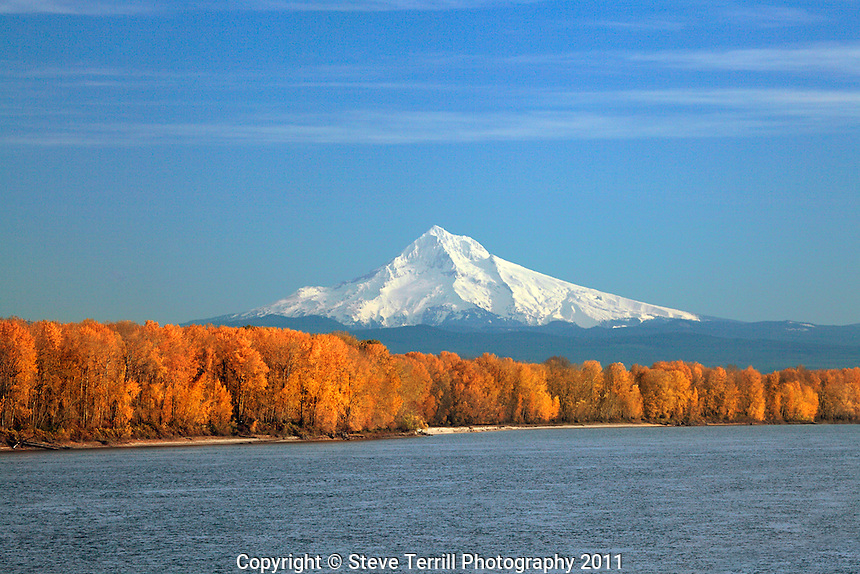 Mt Hood with cottonwood trees lining banks along Columbia River, Oregon