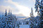 Idaho, Coeur d' Alene, Cougar Bay. Ice and snow covered lakeshore trees as the sun clears the fog over Lake Coeur d' Alene on a subzero morning.