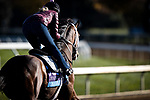 Likeable, trained by Todd A. Pletcher, exercises in preparation for the Breeders' Cup Juvenile at