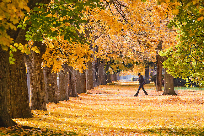 Walking through freshly fallen leaves in the University neighborhood in Missoula, Montana