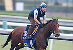 5 November 2009:  Gio Ponti works out in preparation for the Breeders Cup at Santa Anita Race Track in Arcadia, CA.