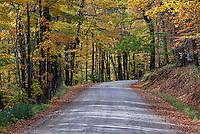 Unpaved mountain road through colorful autumn trees, Vermont, USA