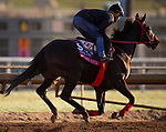 October 28, 2019 : Breeders' Cup Sprint entrant Hog Creek Hustle, trained by Vickie L. Foley, exercises in preparation for the Breeders' Cup World Championships at Santa Anita Park in Arcadia, California on October 28, 2019. Carolyn Simancik/Eclipse Sportswire/Breeders' Cup/CSM