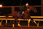October 18, 2015:  Tapiture works in preparation for the Breeder's Cup Las Vegas Dirt Mile for trainer Steve Asmussen.  Candice Chavez/ESW/CSM