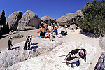 African Penguins & People On Beach