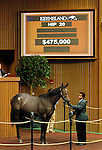 September 14, 2015: Hip 20 Hard Spun - Warbling colt consigned by Taylor Made Sales.  Candice Chavez/ESW/CSM