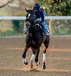 November 1, 2020: Dayoutoftheoffice, trained by trainer Timothy E. Hamm, exercises in preparation for the Breeders' Cup Juvenile Fillies at Keeneland Racetrack in Lexington, Kentucky on November 1, 2020. Scott Serio/Eclipse Sportswire/Breeders Cup /CSM