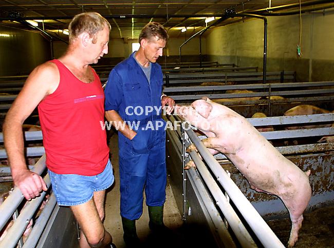 """ambt delden  280701 johan (voorgrond) havekate, de """"varkensboer"""" en gudie havekate (achtergrond ) de koeienboer in hun nieuwe varkensstal met een beer,die nog geen beer is omdat hij nog geen 85 kg weegt. .<br />foto frans ypma APA-foto"""