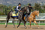 ARCADIA, CA JANUARY 21: Arrogate, accompanied by assistant trainer Jimmy Barnes and Sunny on the track prior to his final work before the Pegasus on January 21, 2017 at Santa Anita Park in Arcadia, CA.(Photo by Casey Phillips/Eclipse Sportswire/Getty Images)