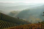 Italien, Piemont, Langhe, bei Alba: Weinberge, Landschaft, Morgennebel | Italy, Piedmont, Langhe, near Alba: hazy landscape, vineyards
