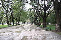 The park at the Plaza San martin Square with big black trees, one lone man in the distance, otherwise the park is empty abandoned. the Plaza San Martin Square renamed Plaza de la Fuerza Aerea or Plaza Fuerza Retiro Buenos Aires Argentina, South America