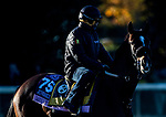 November 4, 2020: Dayoutoftheoffice, trained by trainer Timothy E. Hamm, exercises in preparation for the Breeders' Cup Juvenile Fillies at Keeneland Racetrack in Lexington, Kentucky on November 4, 2020. Jon Durr/Eclipse Sportswire/Breeders Cup