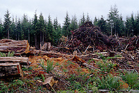 FALLEN TIMBER and wood scraps in the middle of a CLEAR CUT FOREST - CALIFORNIA