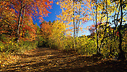 Pawtuckaway State Park - Round Pond Road in Nottingham, New Hampshire, USA during the autumn months