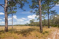 Part of the Florida Trail, National Scenic Trail, winding through the sand pine scrub and oak hammock habitats of Hopkins Prairie in Ocala National Forest in Florida