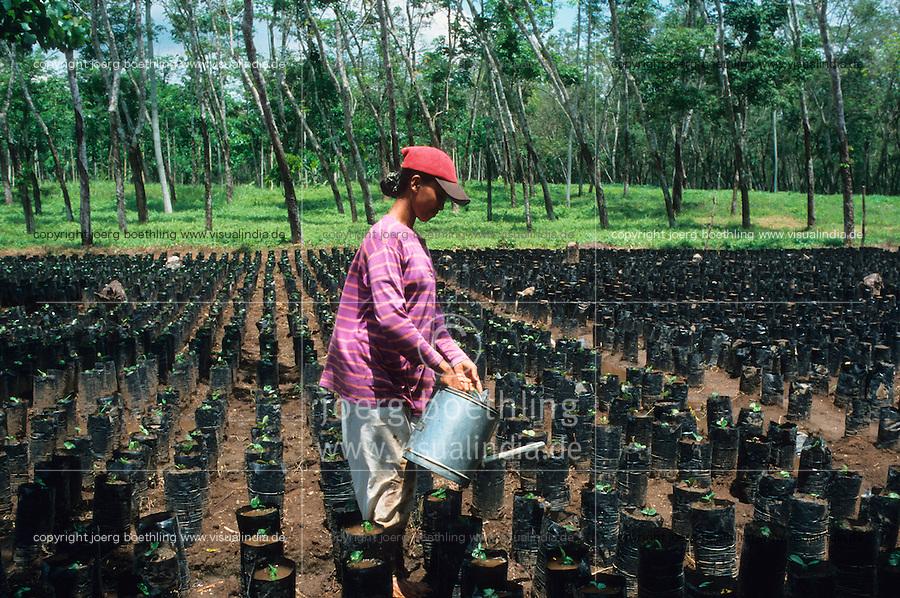 Indonesien Java Jember, Frau bewaessert Kaffee Setzlinge vor Kautschuk Plantage / Indonesia Java Jember, woman irrigate coffee samplings in front of rubber plantation