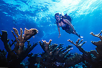Female Scuba Diver above an Elkhorn Coral reef at the East End of Grand Cayman Island, BWI.