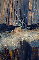 Petrified wood and sagebrush<br /> Black Forest<br /> Petrified Forest National Park<br /> Colorado Plateau,  Arizona