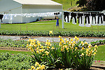 Amish backyard with clothesline, yellow iris, and child reaching for clothes.