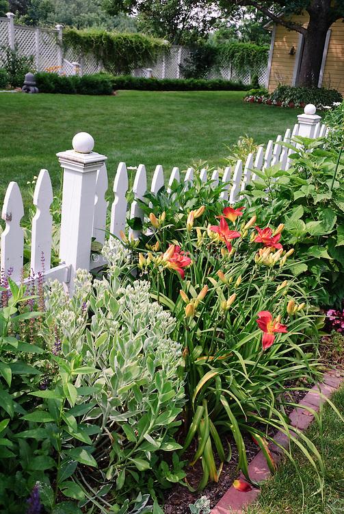 White picket fence with daylilies Hemerocallis, Sedum, lawn grass, garden, trees, climbing vines, house