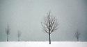 A few saplings stand in the falling snow on Belle Isle in Detroit.