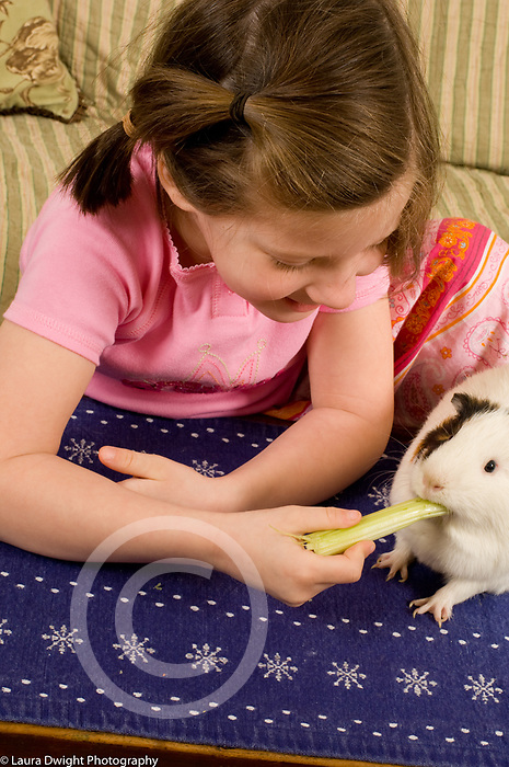 5 year old girl feeding celery to pet guinea pig