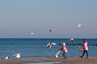Kinder füttern Möwen am Strand, Silbermöwe, Larus argentatus, herring gull und Lachmöwe, Larus ridibundus, Chroicocephalus ridibundus, black-headed gull