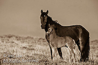 Wild Horse Photography by western photographer Jess Lee. Pictures of mustangs in the West. Fine art images,Prints,photos Wild horse photo,wildhorses in the american west,