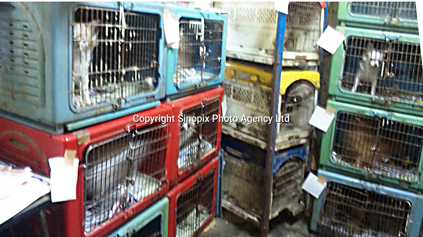 """Conditions in a breeders """"puppy mill"""" in Kyushu, Japan show the horrendous conditions that many breeders operate under. Breeders are largely unregulated in Japan...photo by  / Sinopix............"""