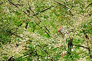 Image Ref: CA1280<br /> Location: Christmas Hills, Yarra Valley<br /> Date of Shot: 14 April 2013