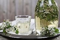 Weißdorn-Wein, Weißdornblüten-Wein, Weissdornblüten-Wein, Weißwein mit Weißdornblüten aromatisiert, Weißdorn, Weissdorn, Weiß-Dorn, Weiss-Dorn, Crataegus spec., English Hawthorn, May, wine, Aubépine