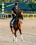 January 21, 2021: Code of Honor exercises as horses prepare for the 2021 Pegasus World Cup Invitational at Gulfstream Park in Hallandale Beach, Florida. Scott Serio/Eclipse Sportswire/CSM