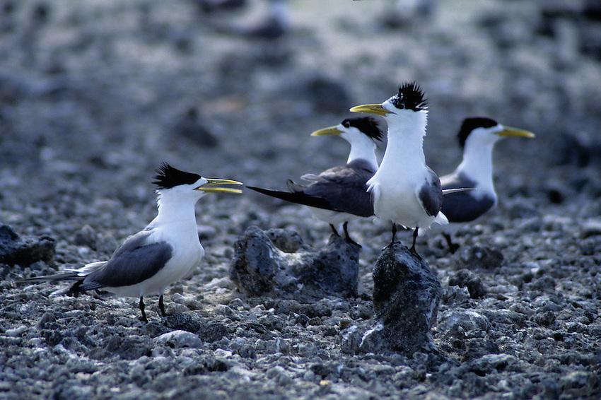 Sea Bird Rookery on an Atoll in the north of Palau Micronesia