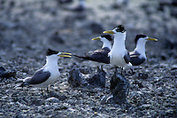 Sea Bird Rookery on an Atoll in the north of Palau Micronesia