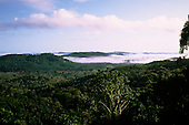 Bahia, Brazil. Mata Atlantica (Atlantic Rainforest) in the early morning with mist still lying in the valleys.