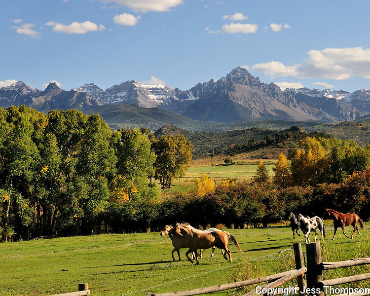 Fall color in Colorado pasture with horses.