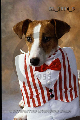 Interlitho, Alberto, ANIMALS, dogs, photos, dog, vest(KL1994/5,#A#) Hunde, perros