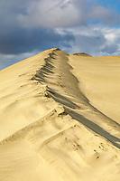 Sculpted ridge of sand in the Great Kobuk Sand Dunes in the Kobuk Valley National Park, Arctic, Alaska.
