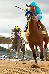 ARCADIA, CA  MARCH 7: #4 Authentic, ridden by Drayden Van Dyke holds off #2 Honor A. P., ridden by Mike Smith, to win the San Felipe Stakes (Grade ll) on March 7, 2020, at Santa Anita Park in Arcadia, CA. (Photo by Casey Phillips/Eclipse Sportswire/CSM