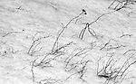 The high winds push the twigs forward in the textured snow.