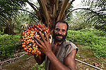 Sustainable Palm Oil Plantation in PNG